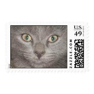 Kohl Grey kitten face postage