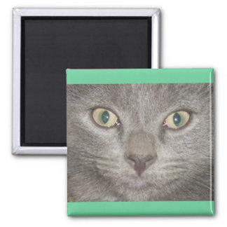 Kohl Grey Kitty Face 2 Inch Square Magnet