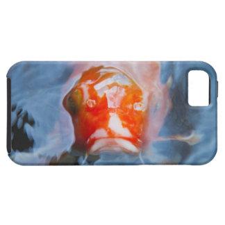 Koi Carp (Cyprinus carpio), Japan iPhone SE/5/5s Case