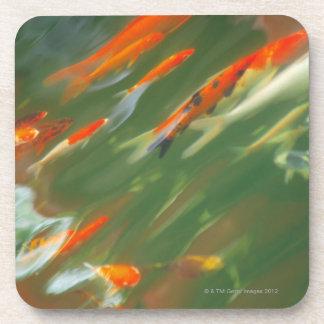 Koi carp fish swimming in a pond drink coaster