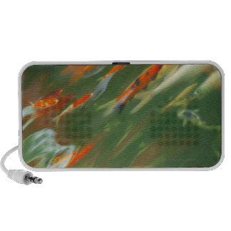 Koi carp fish swimming in a pond mini speaker