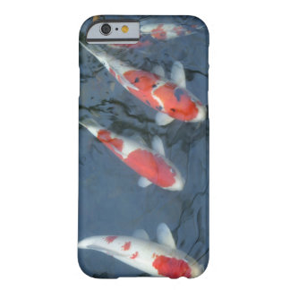 Koi carp in pond, high angle view barely there iPhone 6 case