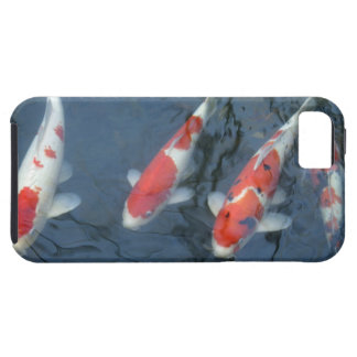 Koi carp in pond, high angle view iPhone 5 covers