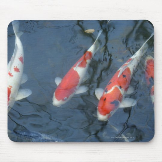 Koi carp in pond, high angle view mouse pad