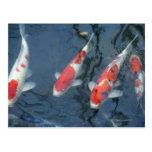 Koi carp in pond, high angle view postcard