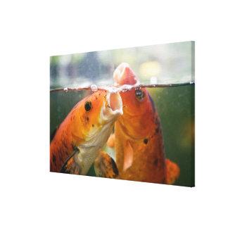 Koi carps gallery wrapped canvas