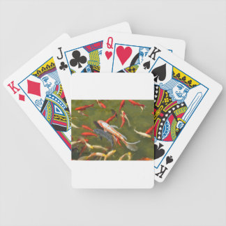 Koi carps in pond bicycle playing cards