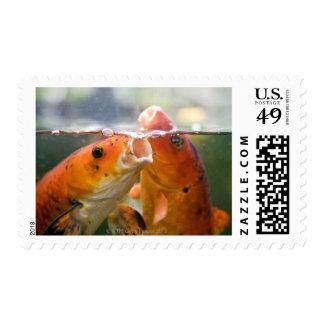 Koi carps postage stamps