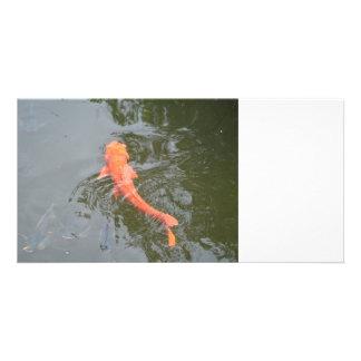 koi del oro en la charca con la imagen de la tarjetas fotográficas personalizadas