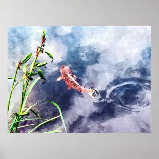 Koi en agua que remolina posters
