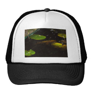 Koi Fish in a Lily Pond Hats