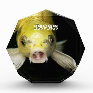 Koi Fish in Japan Award