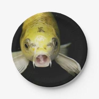 Koi Fish in Japan Paper Plate