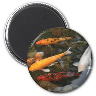 Koi Fish In Pond Photograph Magnet
