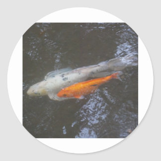 KOI Fish in the pond Classic Round Sticker