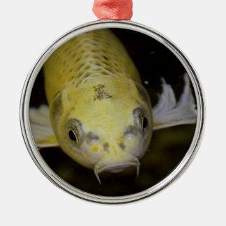 Koi Fish Ornaments