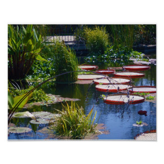 Koi Fish Pond at Botanical Garden Poster Print