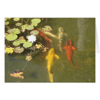 Koi fish with Lily in a Pond Greeting Card