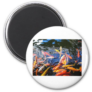 Koi Goldfish Kona Hawaii Magnet