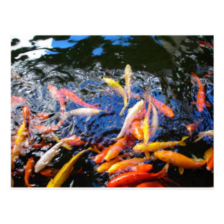 Koi Goldfish Kona Hawaii Postcard