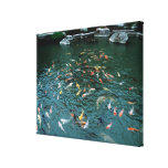 Koi in a Pond Gallery Wrap Canvas