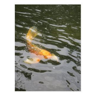 Koi, jardines japoneses, ROCKFORD IL Postales