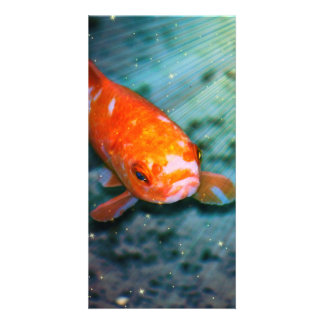 Koi Photo Card