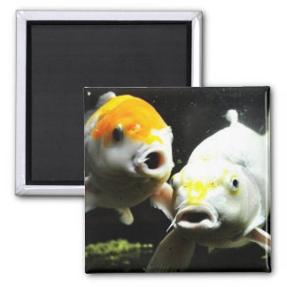 Koi Photography 2 Inch Square Magnet