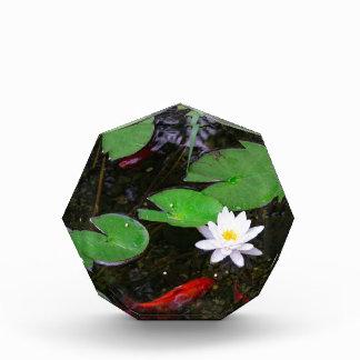 Koi Pond Acrylic Award