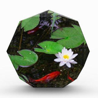 Koi Pond Award