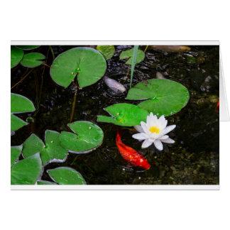 Koi Pond Card
