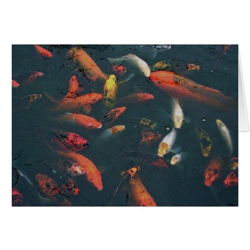 Koi pond cards zazzle for Minimum depth for koi pond