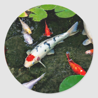 Koi Pond Classic Round Sticker