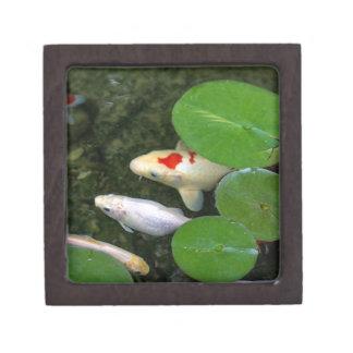 Koi Pond Gift Box
