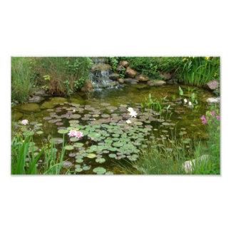Koi Pond Photo Enlargement