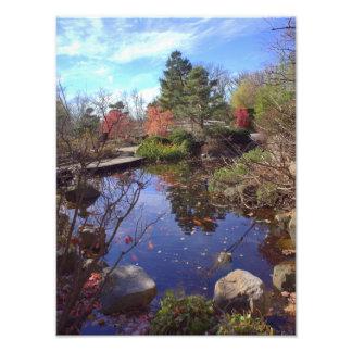 Koi Pond scene Art Photo