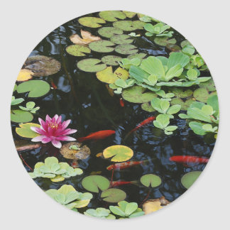 Koi Pond Sticker