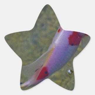 Koi Star Sticker