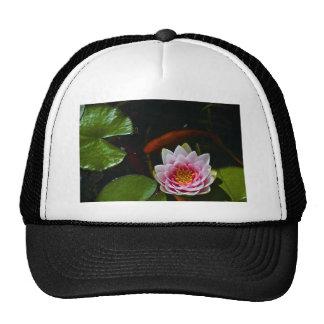 koi  swimming around lotus trucker hat