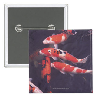 Koi swimming in pool buttons