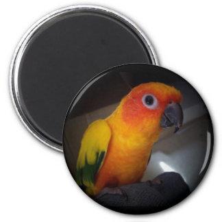 kojo the sun conure - Customized 2 Inch Round Magnet