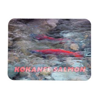 Kokanee Salmon Rectangular Photo Magnet
