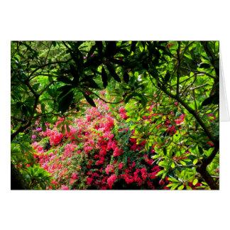 Koko Crater Botanical Garden Card