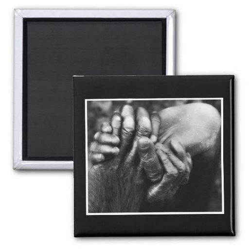 Koko's Hands 2 Inch Square Magnet