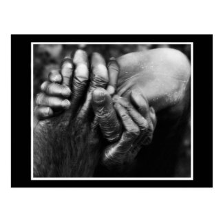 Koko's Hands Postcard