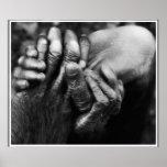 Koko's Hands Poster