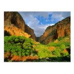 Kolob Canyon at Zion Canyon in Zion National Postcard