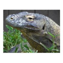 Komodo Dragon Close Up Postcard