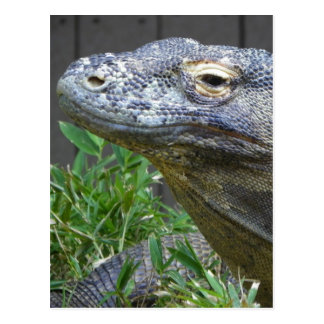 Komodo Dragon Close Up Post Cards