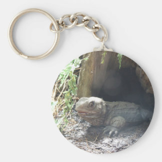 Komodo Dragon Coming Out Of His Home Under Tree Basic Round Button Keychain